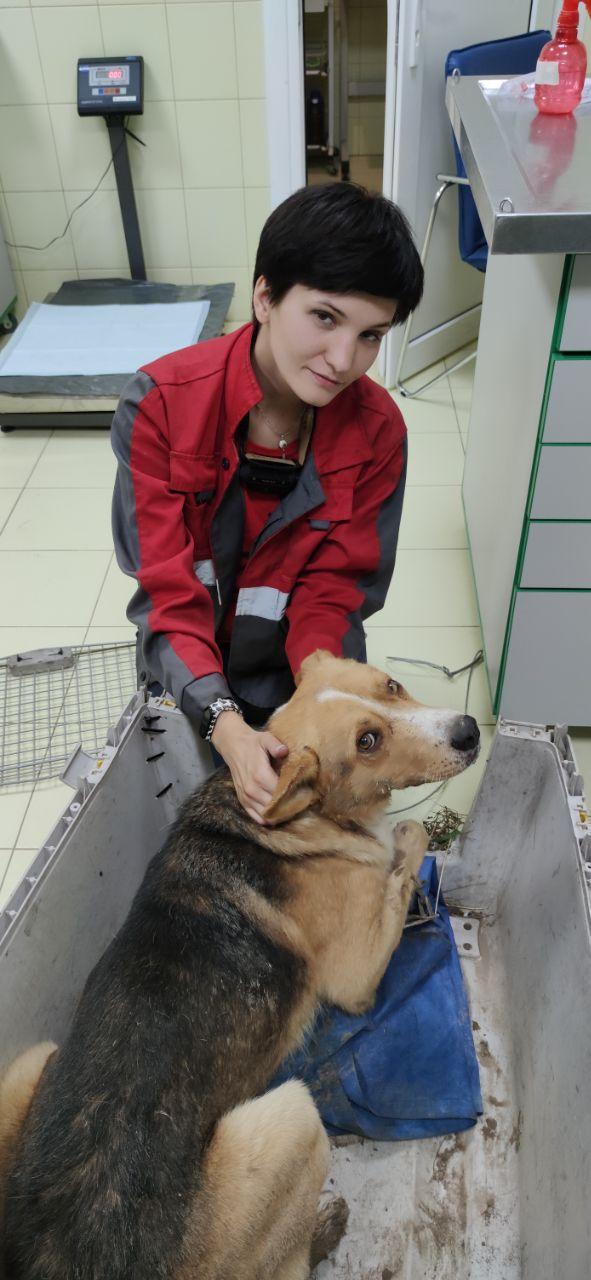 На Вишгородщині врятували з труби і капкана бідолашного пса -  - 118402362 2749293328649899 9152947759222030268 o