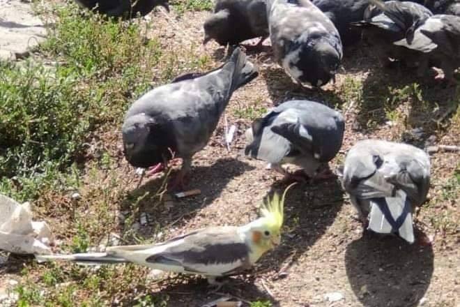 На вулиці Осокорків живе папуга -  - 118645839 1759309827568236 5190873875569866975 n