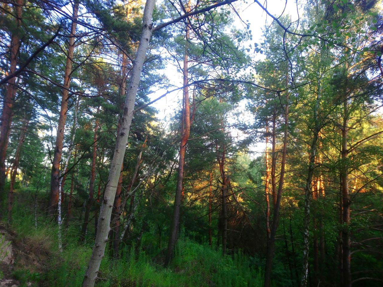 За півроку в Україні відтворено майже 32,3 тис га лісів - незаконне вирубування лісу, ліс, Держлісагентство - 14 les