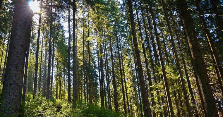 Прокуратура повернула державі частину лісу на Бориспільщині -  - 462073 2 12336.762x400
