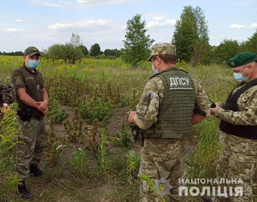 У зоні радіаційного забруднення неподалік ЧАЕС знайшли наркопосіви -  - CHornob1