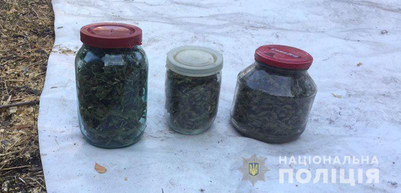 На Вишгородщині знайшли «чергову» наркоплантацію -  - Konopli3