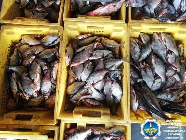 Вишгородщина: промисловики рибалили на фарватері -  - Ryba1