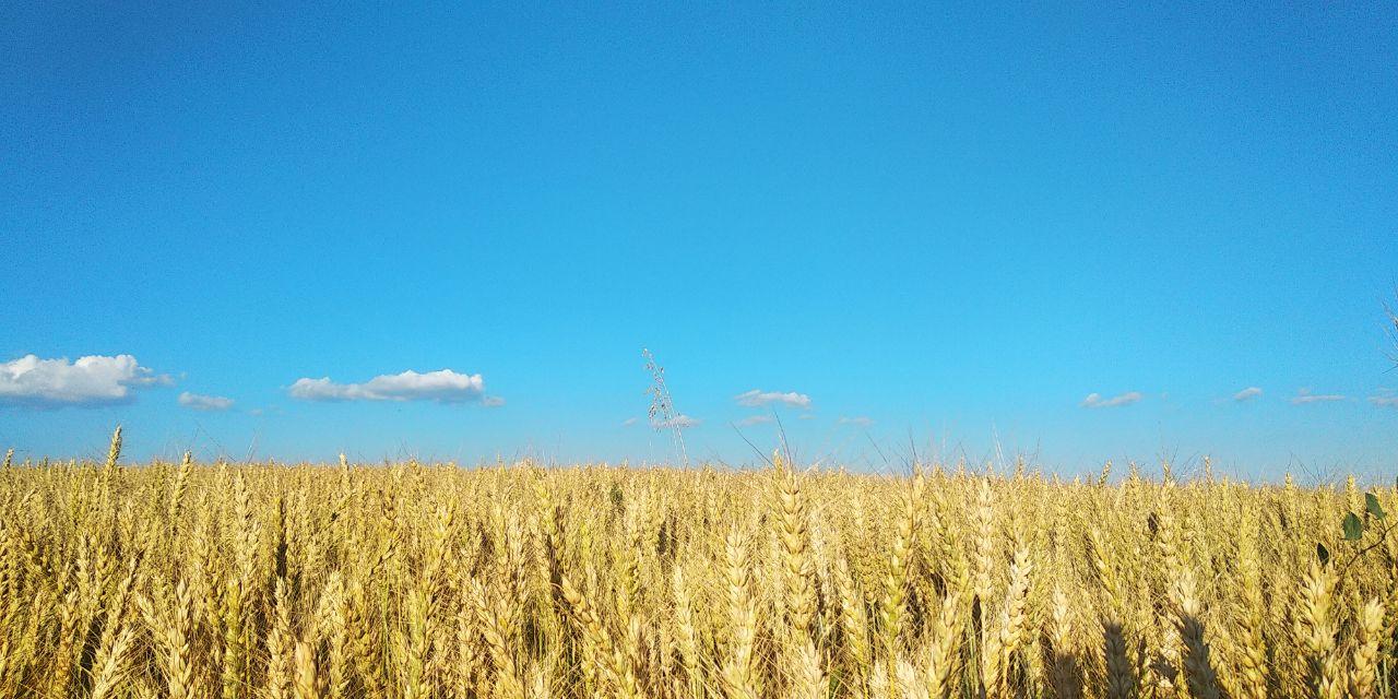 Середня температура серпня у Києві була на 2,8°С вище за кліматичну норму -  - 02 leto