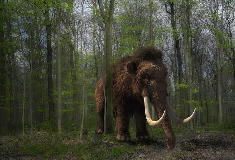 У Мексиці, будуючи аеропорт, знайшли найбільше в світі «кладовище» мамонтів -  - 08 mamont2
