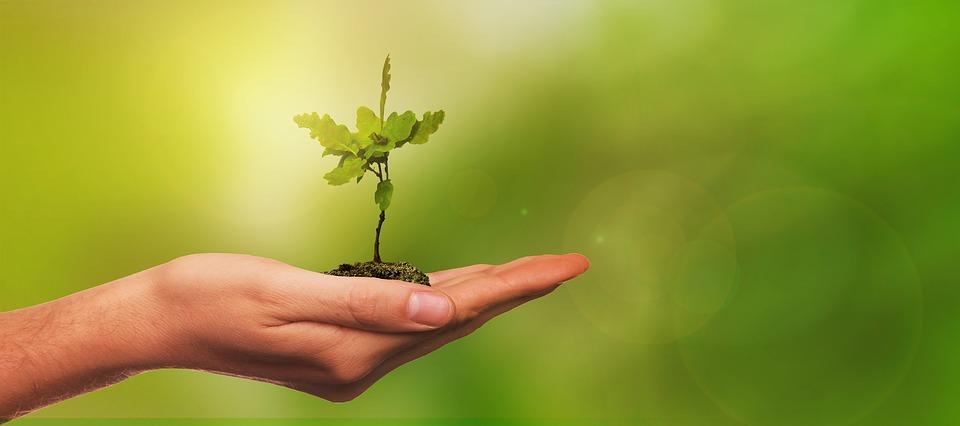 У жовтні в Україні за день висадять 1 млн дерев - екологічна свідомість, Екологічна акція, еко, Дерева - 10 derevo