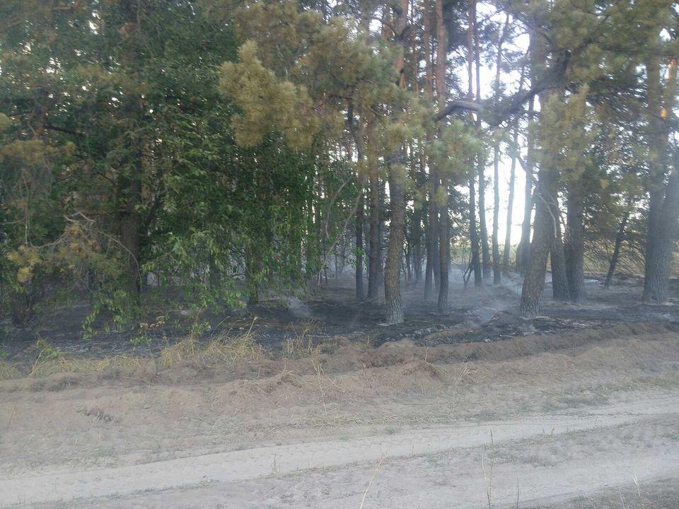 На Переяславщині усі підрозділи ДСНС Лівобережжя гасили пожежу - Переяслав, ліс, ДСНС, вогонь - 118588675 1019851998463150 2940610918565156522 o