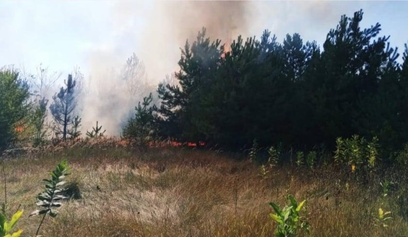 Спекотні вихідні: на Обухівщині вигорів 0,1 га торфовищ - торф'яна пожежа, вогонь - 119448101 764615754372855 6030085258028696640 n