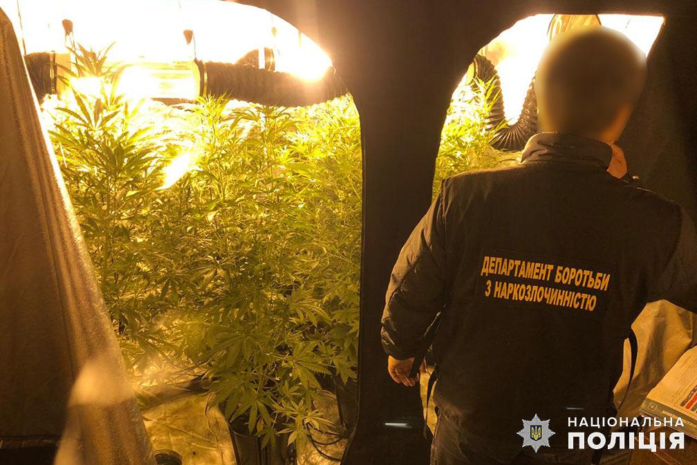 Києво-Святошинський район: у наркодилера знайшли «плантацію» марихуани -  - 119726053 3278422808878267 7240577152003698066 o