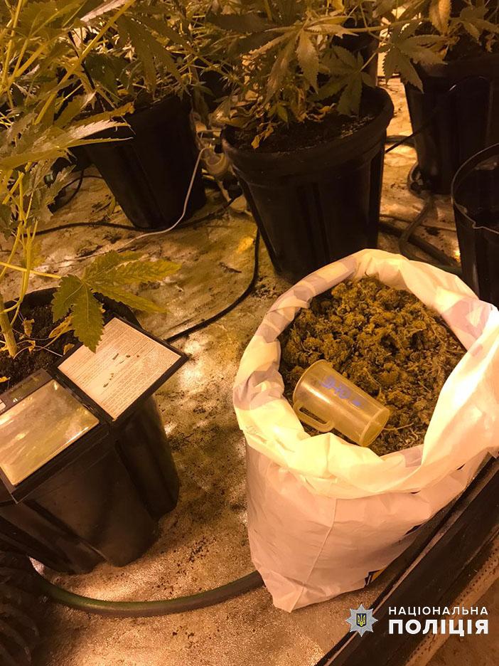 Києво-Святошинський район: у наркодилера знайшли «плантацію» марихуани -  - 14