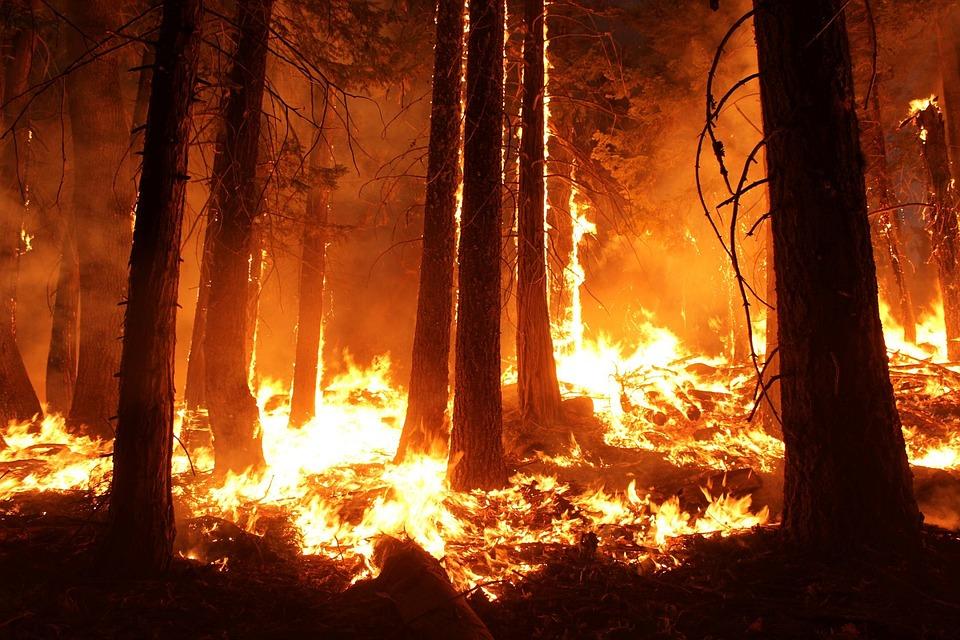 Через спеку на Київщині оголошено надзвичайний рівень пожежної небезпеки - пожежна небезпека, погода - 14 stan2