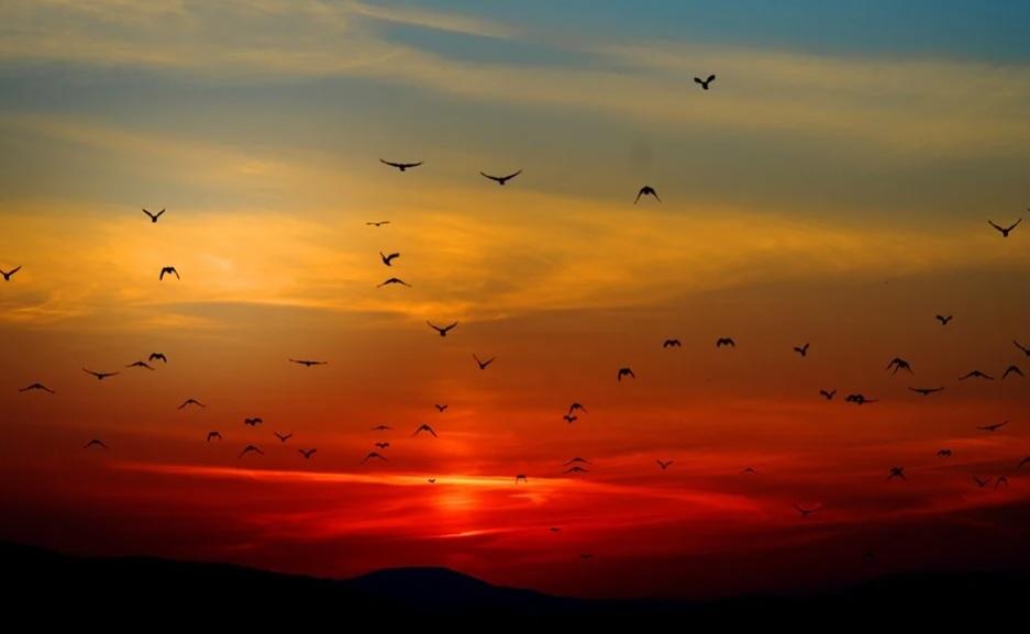 В американському штаті Нью-Мексико загинули сотні тисяч перелітних птахів - Птахи, вимирання тварин - 15 ptahy2