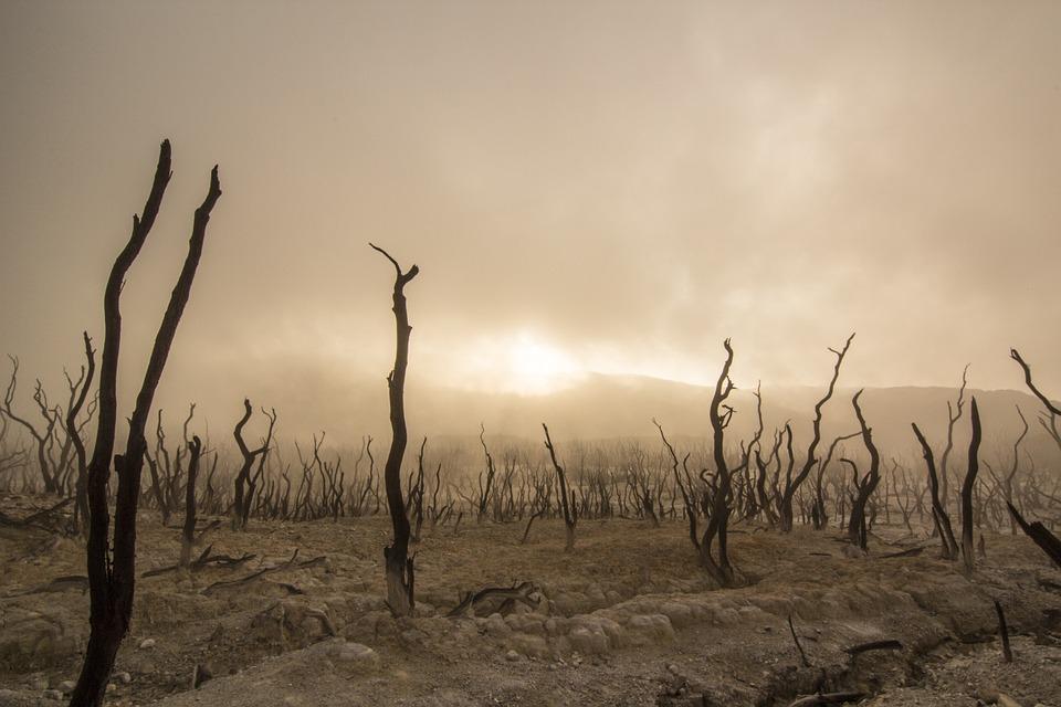 Температура на Землі наближається до рекордних показників за 50 млн років - температура повітря, підвищення температури, глобальні зміни клімату, глобальне потепління - 16 klymat2