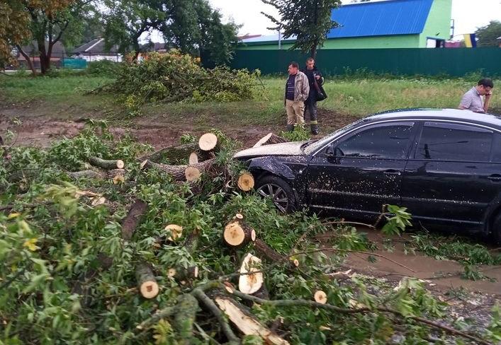 На Вишгородщині буря наробила біди -  - DEREVO NP obr