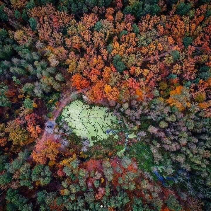 Забудові - ні: нарешті затвердили межі Біличанського лісу -  - FB IMG 1601015746757