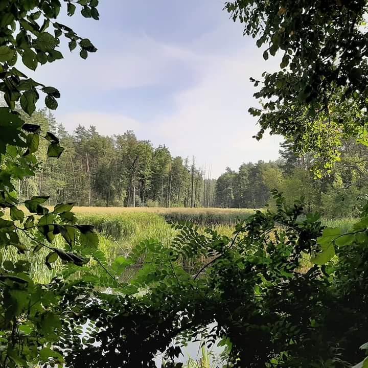 Забудові - ні: нарешті затвердили межі Біличанського лісу -  - FB IMG 1601015816746
