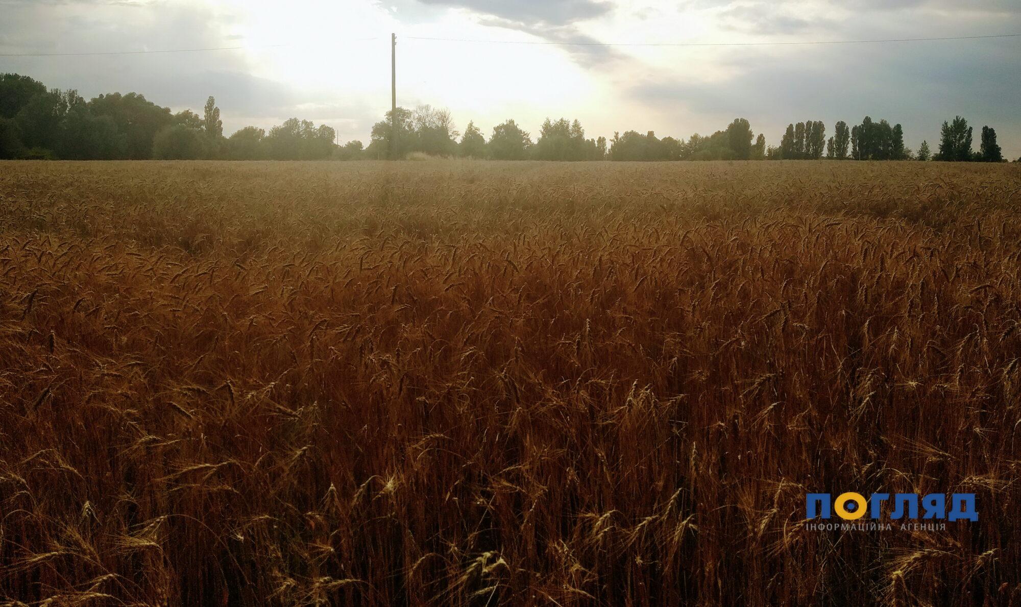 10 га земель на Фастівщині роздали незаконно -  - IMG 20200717 185333 2000x1189