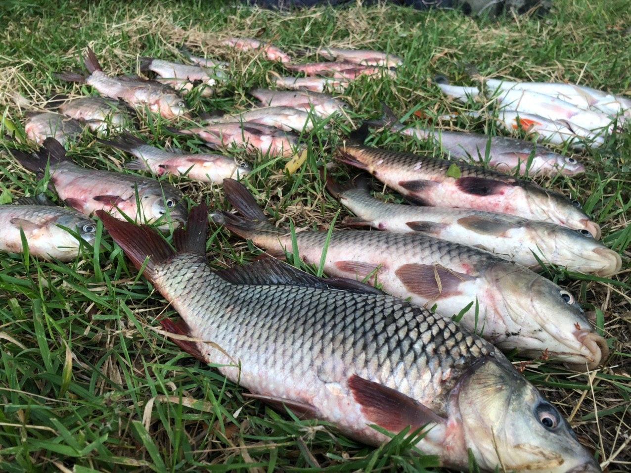 Верховна Рада хоче збільшити штрафи за браконьєрство -  - Malvanyj ryba