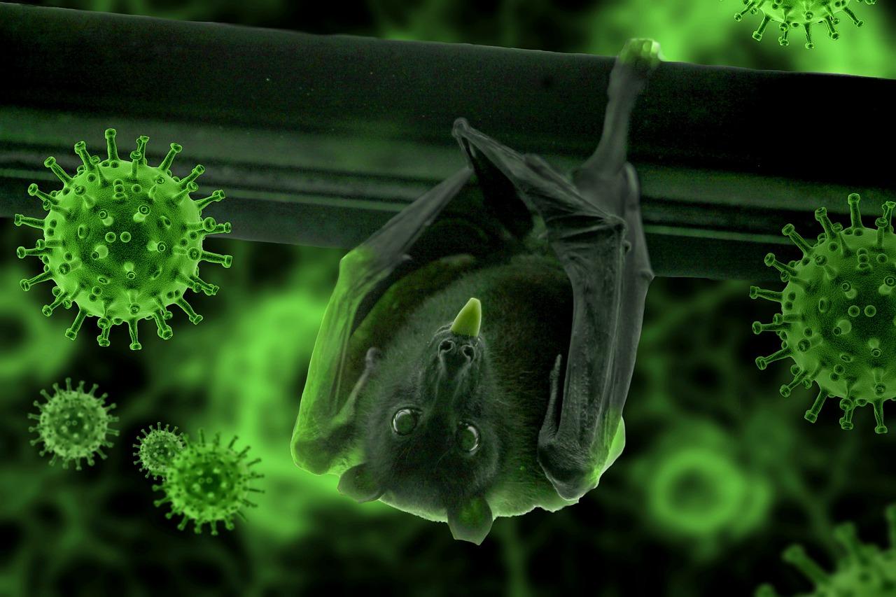 Коронавірус має тваринне, а не лабораторне походження – думка вчених - коронавірус - bat 4963918 1280