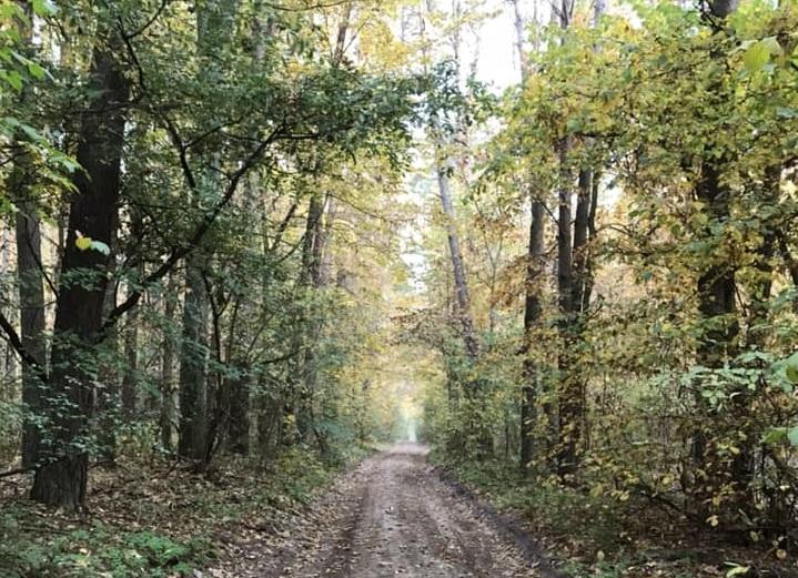 На Кагарличчині державі повернули 2 га землі вартістю понад 2 млн грн - Прокуратура, лісовий фонд, Кагарлицький район - lis