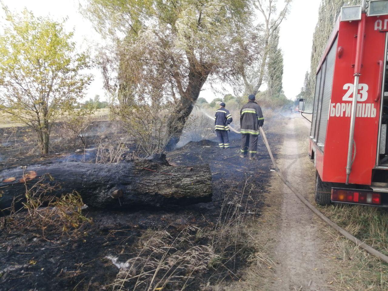 На Бориспільщині горять поля, будинки та дерева - трава, ГУ ДСНС у Київськійобласті, вогонь - photo 2020 09 18 09 00 01