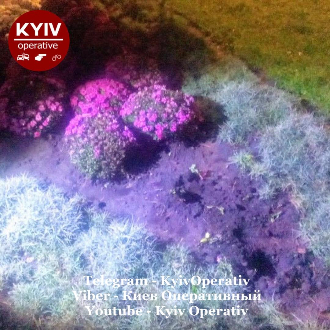Рвала для продажу: в столичному парку затримали викрадачку квітів - крадіжки, квіти - 121673206 1115027862226632 3221406226280378637 o