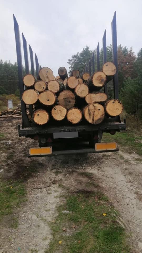 Незаконно різали дуб: під Обуховом зупинили 2 вантажівки з деревиною - вирубка дерев, браконьєри - 121980824 2323613801116150 4548727167193147919 n