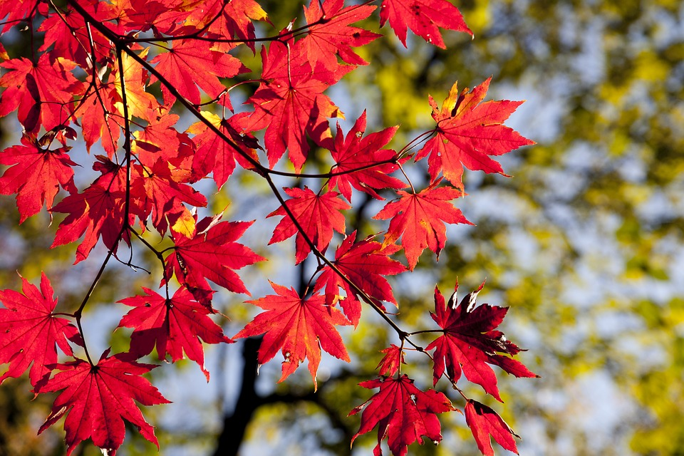Погода на Київщині 12 жовтня: мінлива хмарність, вдень до +21°С - прогноз погоди, погода - 12 pogoda2