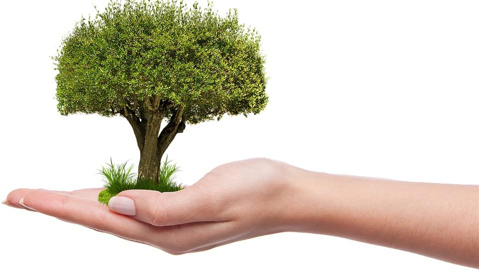 Мільйонне дерево в Україні за добу висадили у нацпарку «Голосіївський» - екологічна свідомість, Екологічна акція, Дерева, висадка дерев, висаджування дерев - 19 derevo