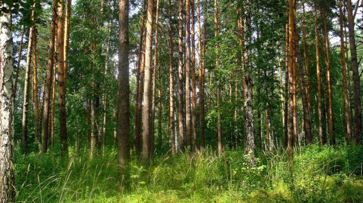 На Бориспільщині прокуратура повернула державі частину лісу - Прокуратура, ліс - 5 6 715x400 1