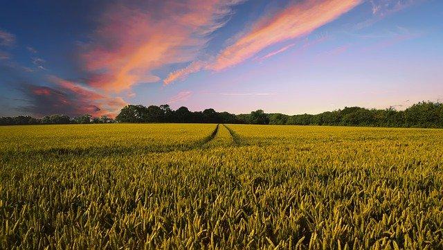 Засуха та збитки: депутатська аграрна рада ініціює нараду - фермерське господарство, посуха, врожай - countryside 2326787 640