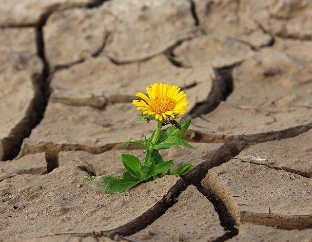 Засуха та збитки: депутатська аграрна рада ініціює нараду - фермерське господарство, посуха, врожай - flower 887443 640