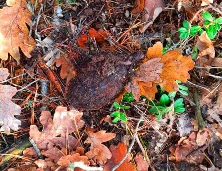 У лісі на Бородянщині знайшли гранату - граната, вибухонебезпечні предмети - 04 granata