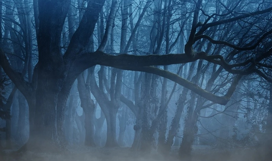Туман не відступає: в Україні другий день поспіль І рівень небезпеки - туман, жовтий рівень небезпеки - 05 tuman2