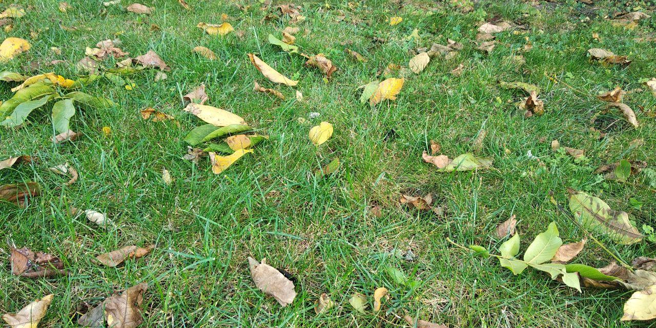 Погода 10 листопада на Київщині: малохмарно, +9°С - прогноз погоди, погода - 10 pogoda2