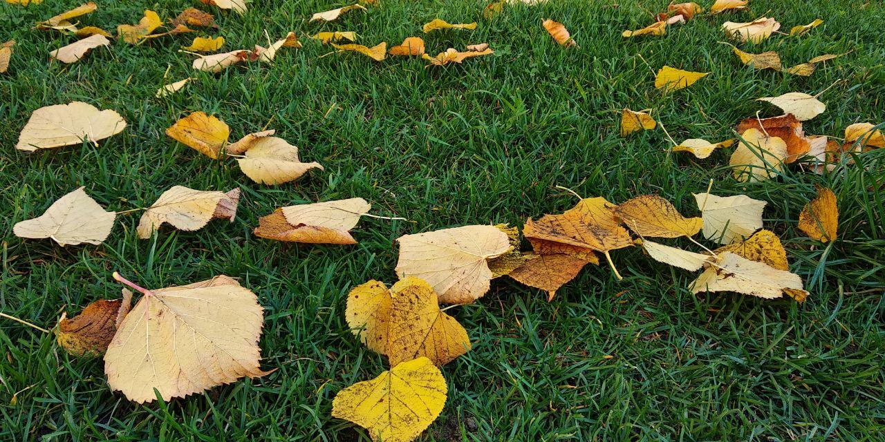 Погода 12 листопада на Київщині: четвер буде бездощовим та прохолодним - прогноз погоди, погода - 12 pogoda2