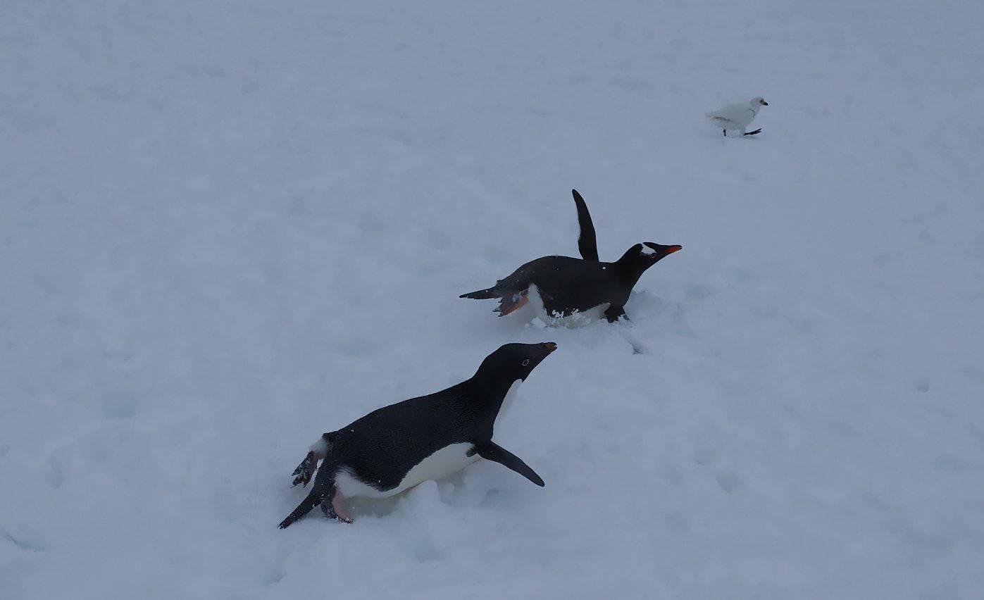 «Пінгвіни та полярники в шоці»: станцію «Академік Вернадський» замело снігом - експедиція, Антарктика - 12 vernadskogo4
