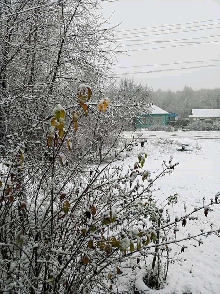 Перший сніг на Київщині випаде 17 листопада - сніг, погода, перший сніг - 16 sneg
