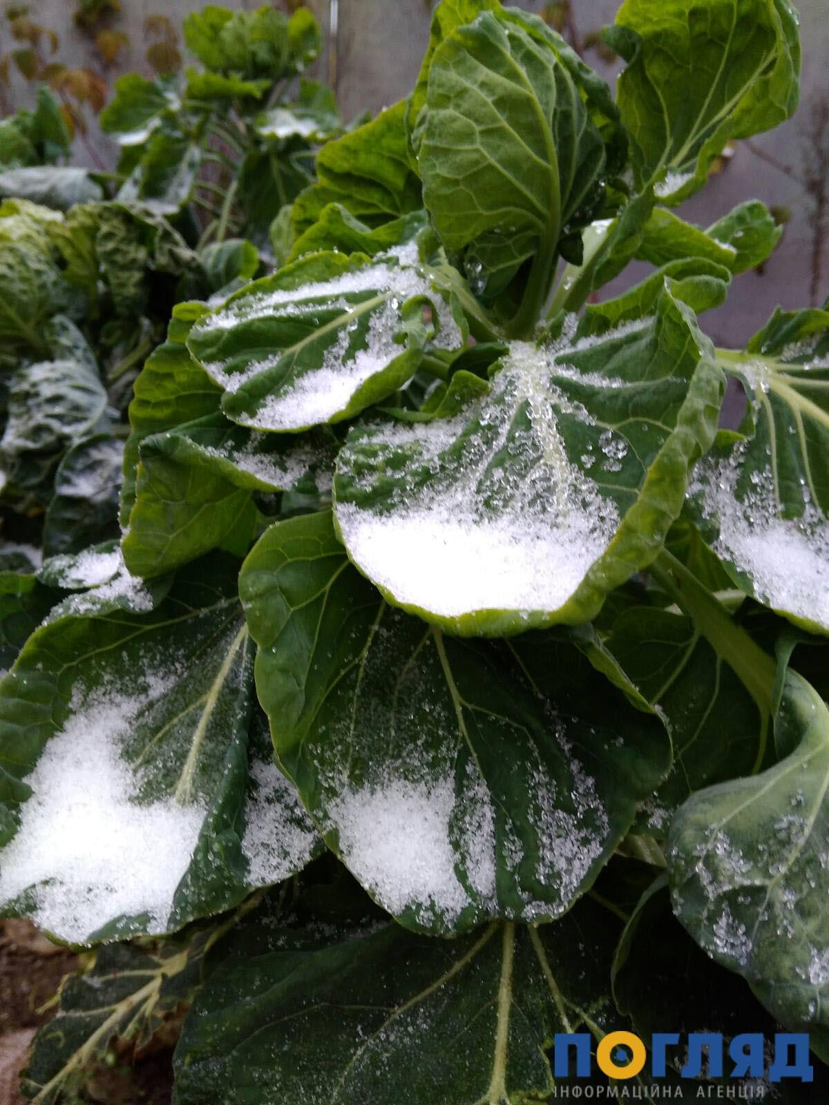 Засніжило: на Київщині випав перший сніг (ФОТО) - сніг, погода, перший сніг - 17 sneg borodyanka2
