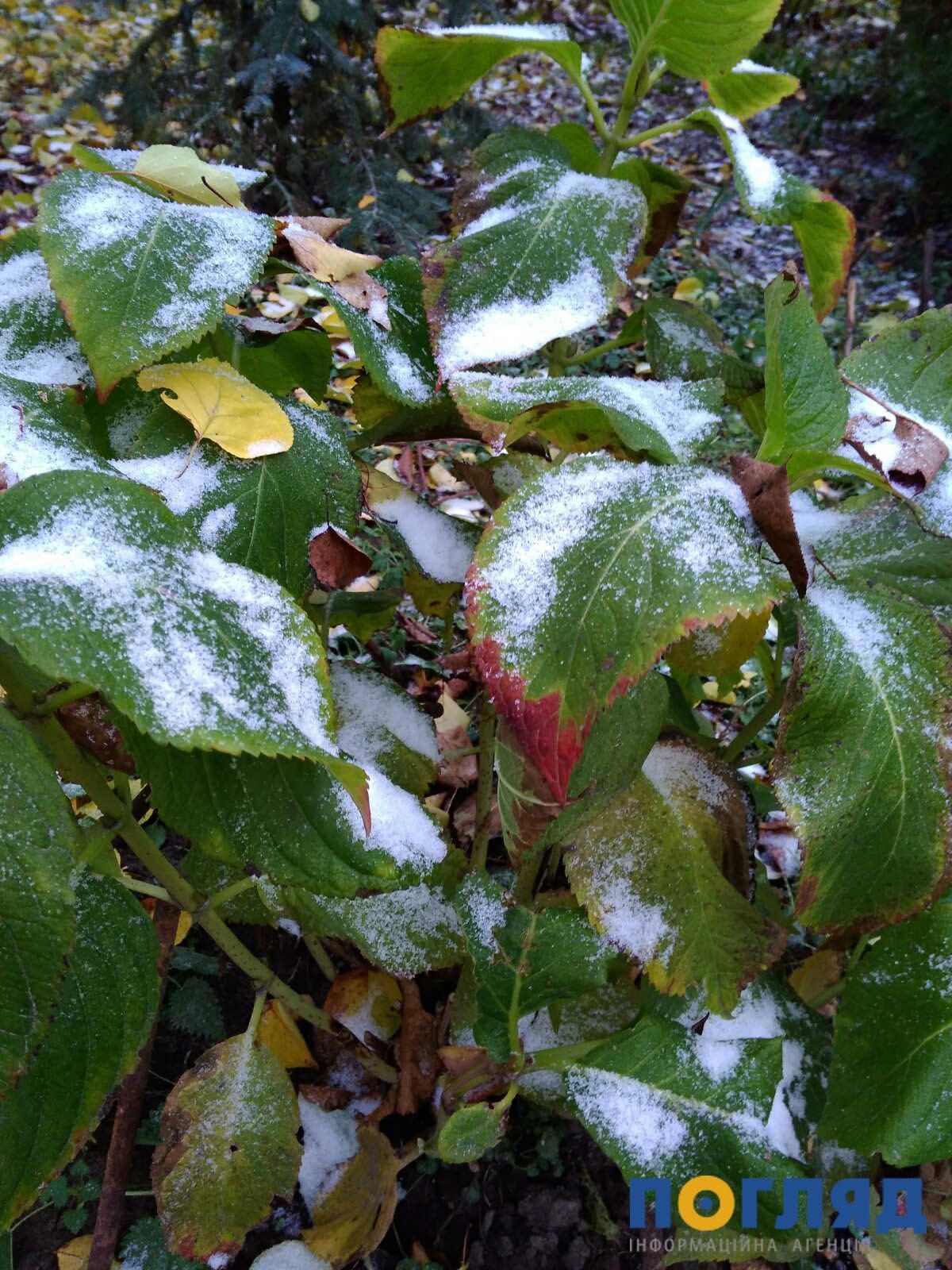 Засніжило: на Київщині випав перший сніг (ФОТО) - сніг, погода, перший сніг - 17 sneg borodyanka4