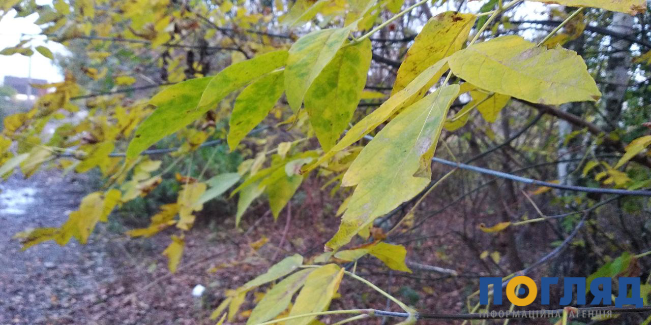 Хмарно з проясненнями: погода 19 листопада на Київщині - прогноз погоди, погода - 19 pogoda2