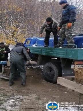 У водосховище на Білоцерківщині випустили 30 тисяч коропів -  - 20.11.20.05