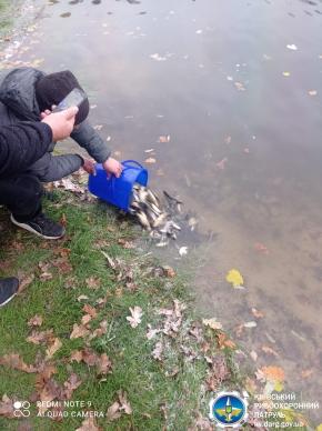 У водосховище на Білоцерківщині випустили 30 тисяч коропів -  - 20.11.20.08