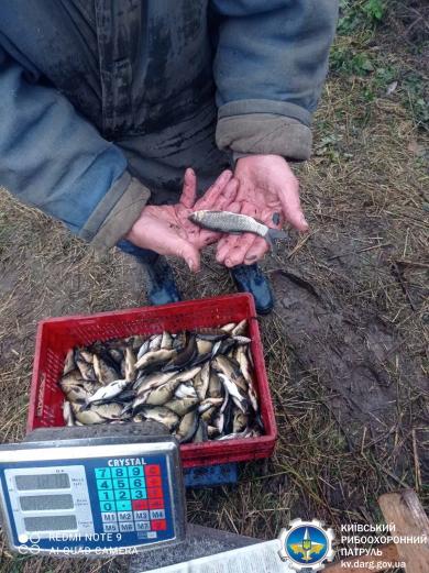 У водосховище на Білоцерківщині випустили 30 тисяч коропів -  - 20.11.20.09