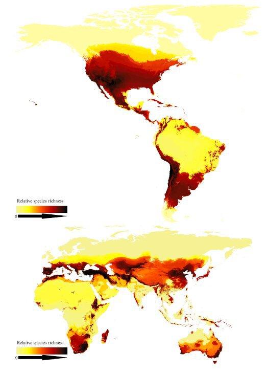 Вчені створили першу мапу глобального біорізноманіття бджіл на планеті - комахи, комаха, дослідження, біорізноманіття, бджоли, бджола - 24 pchely