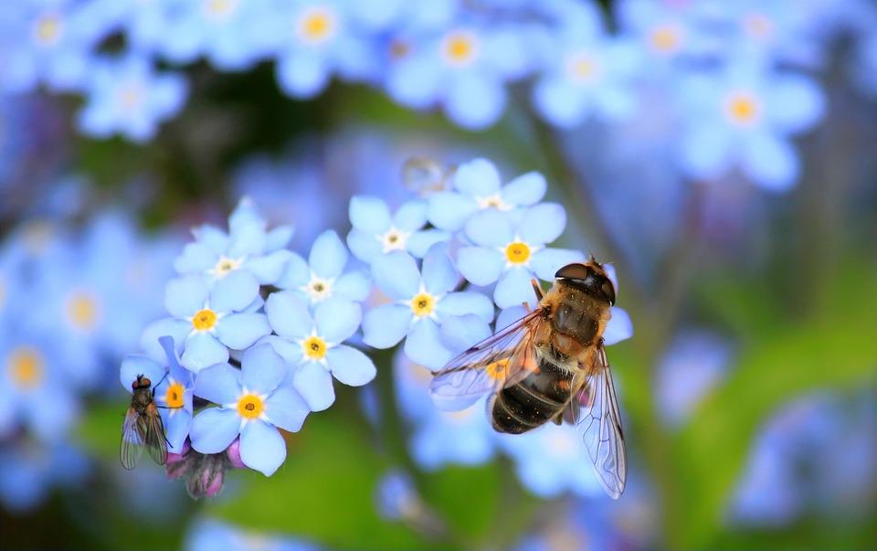 Вчені створили першу мапу глобального біорізноманіття бджіл на планеті - комахи, комаха, дослідження, біорізноманіття, бджоли, бджола - 24 pchely2