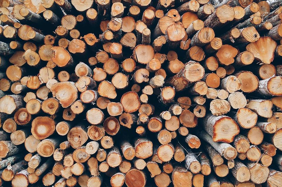 На Київщині під виглядом «оздоровлення лісів» незаконно зрубали дерев на 87 млн грн - рубка дерев, незаконне вирубування лісу, вирубка лісу, вирубка дерев, вирубка - 26 derevo