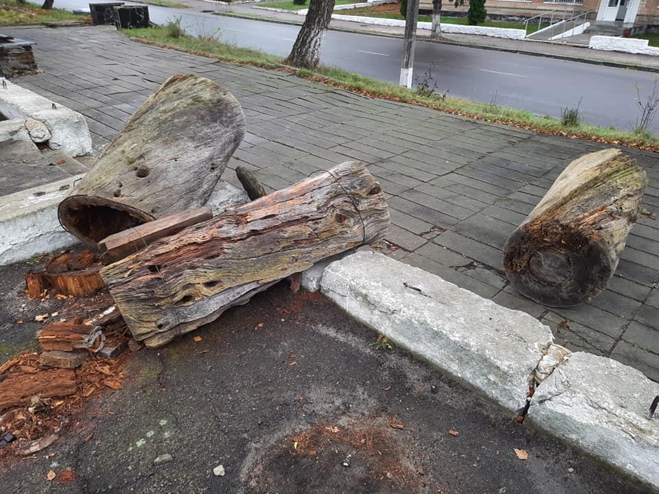 Вандали розбили старовинну борть - вандалізм, бортництво - BORTI ROZBYTI