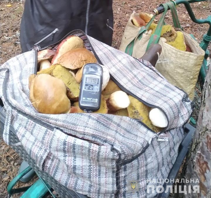 Зі смаком радіації: грибників-порушників покарають - грибний сезон - CHAESgrybnyky3