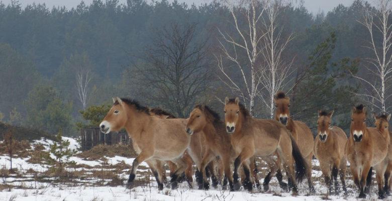 Подвиг українських вогнеборців вшанували створенням колажу - Тварини, музей, вогнеборці - h2 web 1 780x400 1